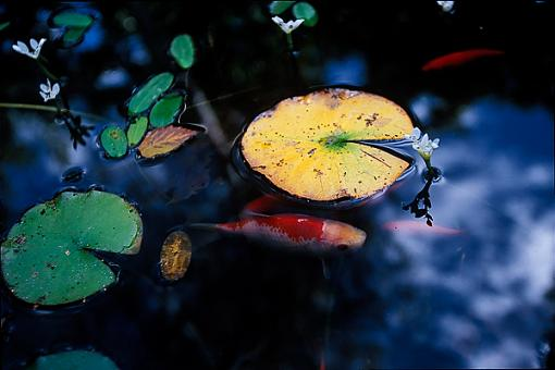 Some Recent Fall Photos-f_0000261_web.jpg