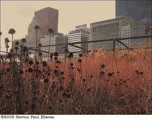 Chicago, November 13, 2005-dead-flower-skyline.jpg