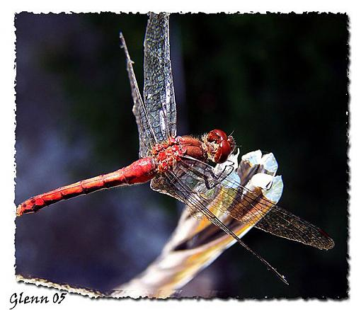 Your Best Photos from 2005-red-dragon-web.jpg
