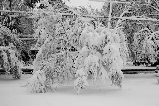 Winter storm shots-heavy-tree.jpg