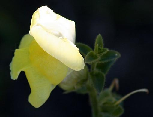 No words: Nature-flowershot.jpg