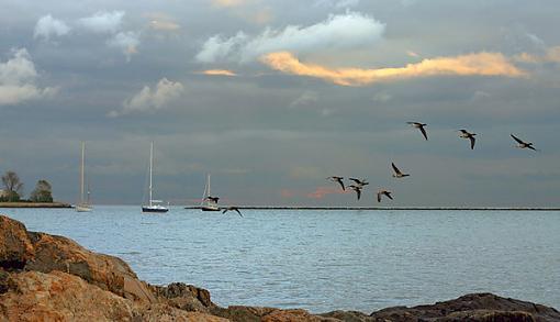 No words: Nature-birdsboats4.jpg