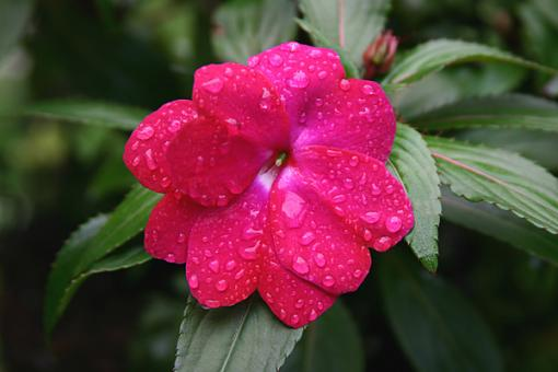 No words: Nature-flowerfullres.jpg