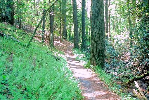 No words: Nature-woodlandtrail.jpg