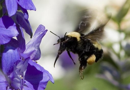 No words: Nature-bee.jpg