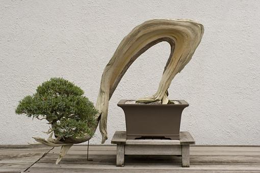 No words: Nature-bonsai.jpg