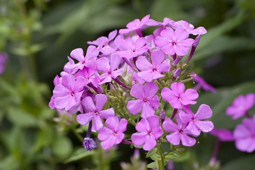 No words: Nature-flowers.jpg