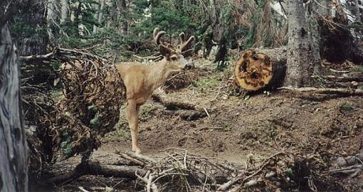 No words: Nature-deer.jpg