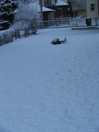Isn't Spring Nice...-snow-2.jpg