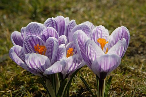 Isn't Spring Nice...-vv9w2780.jpg