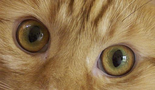 Show Us Your Pets...-pict1662.jpg
