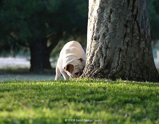 Fun at Balboa Park-bulldog.jpg