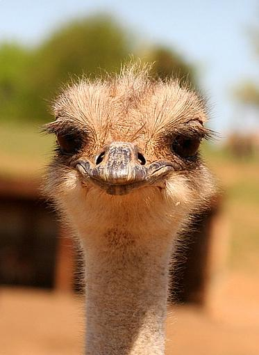 Fun animal shots from our zoo visit-ostrichsayscheese.jpg