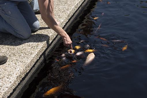 Fish tease-fish-tease.jpg