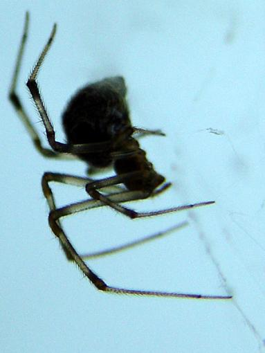 Just shooting thruout the day...-spider.jpg