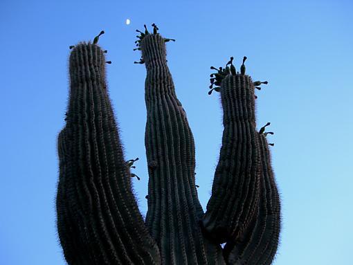 Another 24 hours!  Saturday June 3-cactus-moon.jpg