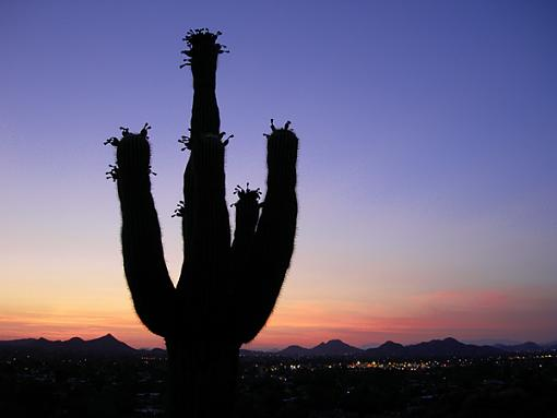 Another 24 hours!  Saturday June 3-cactus-sunset-1.jpg