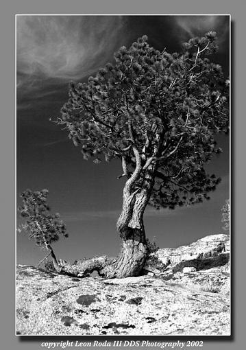 B&W...over used?-pinetreesilverlake2002_resize.jpg