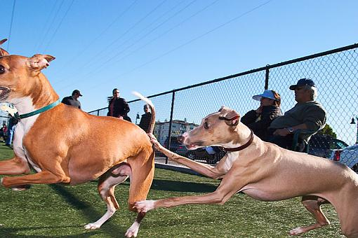 Getting down to the dogs level-crw_9807.jpg