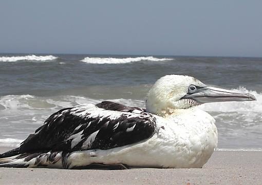 Trip to Assateague Island-bird.jpg