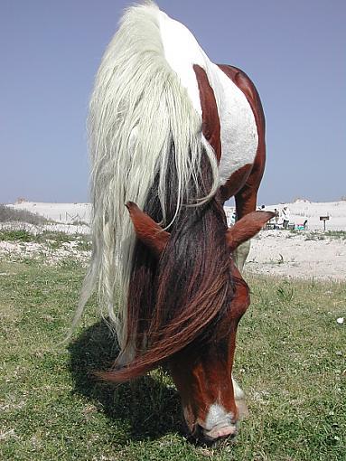 Trip to Assateague Island-horse-close1.jpg