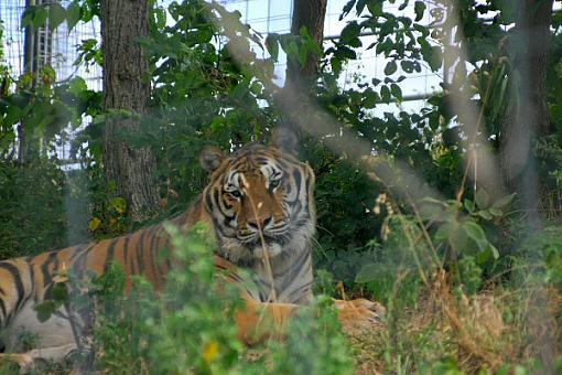 Turpintine Creek Big Cat Sanctuary, Arkansas-img_2434.jpg