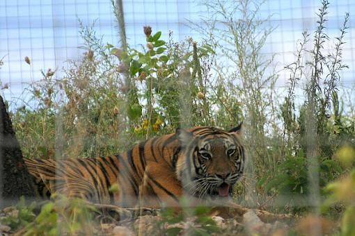 Turpintine Creek Big Cat Sanctuary, Arkansas-img_2440.jpg