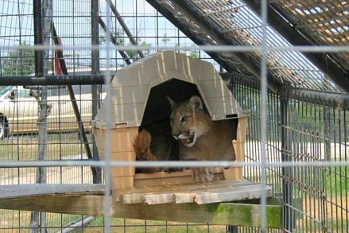 Turpintine Creek Big Cat Sanctuary, Arkansas-img_2457.jpg
