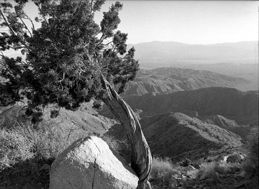 L.A. Photogathering pics-josh-tree4.jpg