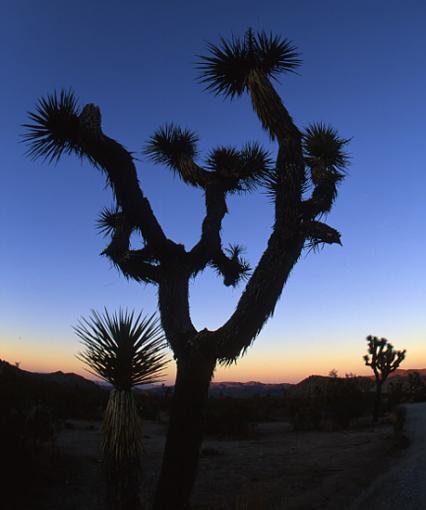 L.A. Photogathering pics-josh-tree8.jpg