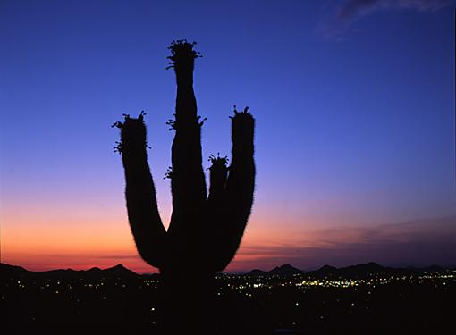 Preliminary Vote: For interest sakes-sunset-cactus.jpg