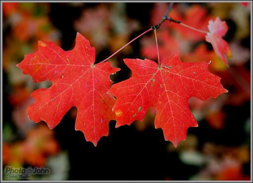 Fall Color-_mg_2891-edit.jpg