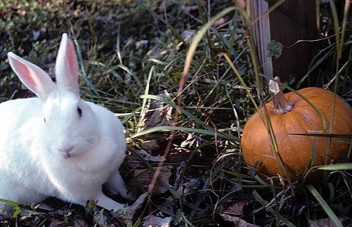 Halloween Rabbit-halloweenrabbit640.jpg