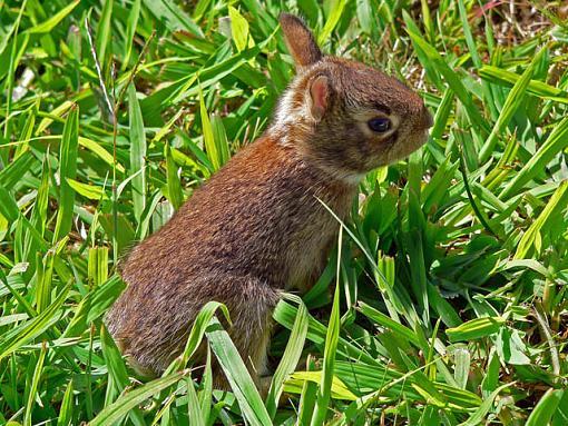 Halloween Rabbit-bunnie2.jpg
