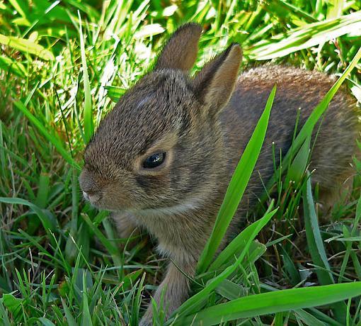 Halloween Rabbit-bunnie5.jpg