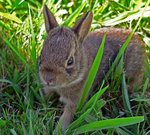Halloween Rabbit-bunnie6.jpg