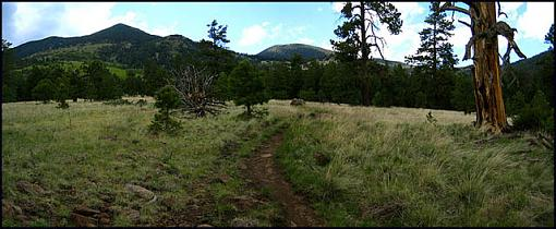 Memorable Flagstaff-flagmeadow02.jpg