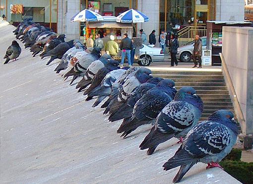 Rare birds ... for Paul-birds.jpg