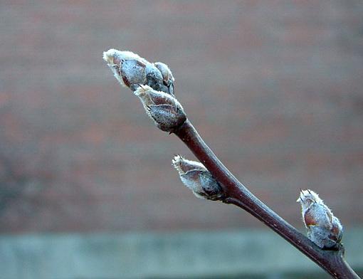 Winter 24 Hours!  Pictures here!-dscf0049-2-640.jpg