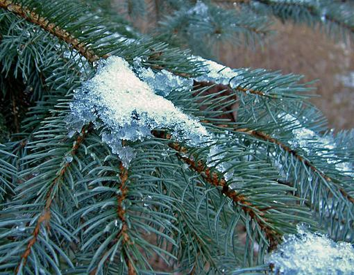 Winter 24 Hours!  Pictures here!-dscf0050-2-640.jpg