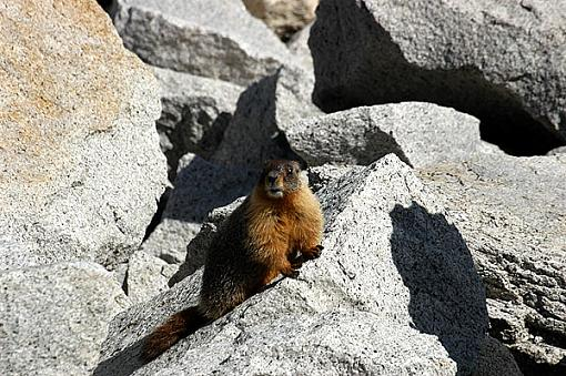 Official Yosemite Gathering Photos-marmot-1.jpg