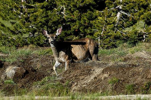 Official Yosemite Gathering Photos-deer-0164.jpg