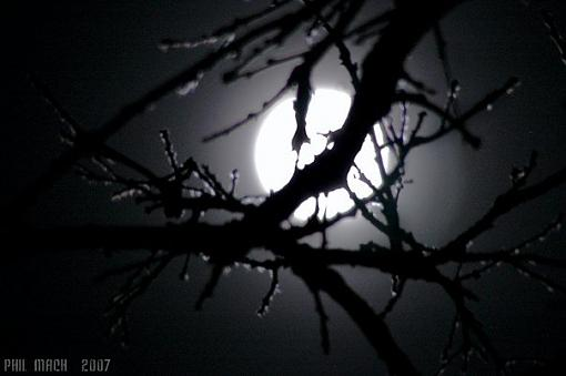 Short Notice Project: Moonlight-tree-silo-moon.jpg
