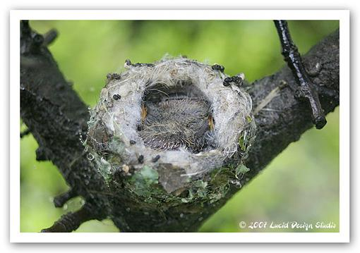 The Spring 24 Hours Pictures-hummingbirds.jpg