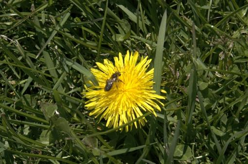 The Spring 24 Hours Pictures-bee.jpg