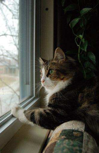 Window Light Portrait-dsc_5040.jpg
