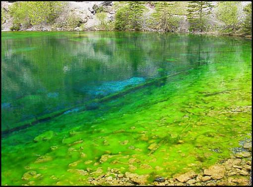 Natural neon impressionism sort of...-lots-algaes.jpg