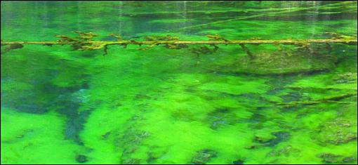 Natural neon impressionism sort of...-monet-panos.jpg