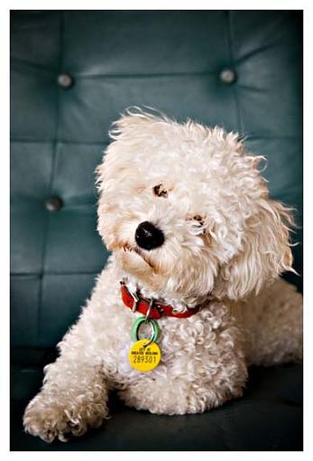 Got a pet? Post a pic!-00-0032jpgw.jpg