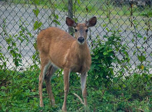 Got a pet? Post a pic!-deer2-small-.jpg